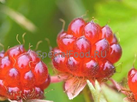 Костяника, ягода