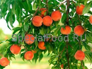 Персики на дереве