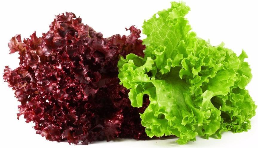 Красный и зеленый салат