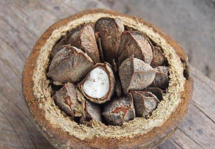Бразильский орех для беременных