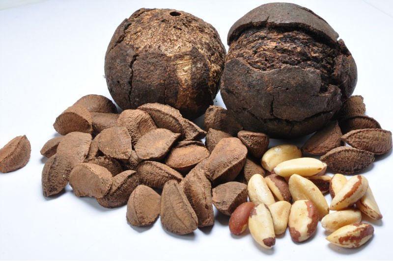 Состав бразильского ореха
