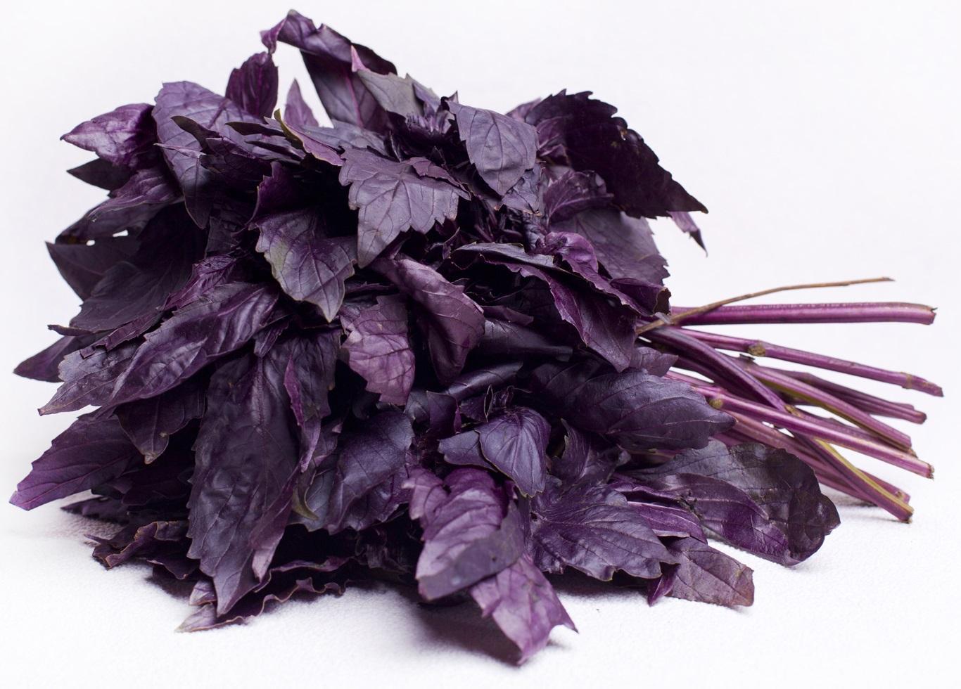 Базилик фиолет